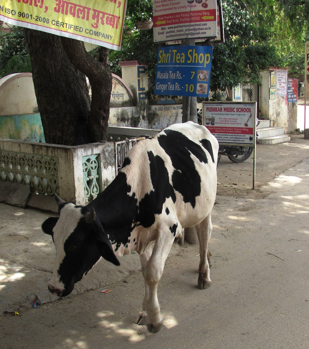 Черно-белая корова