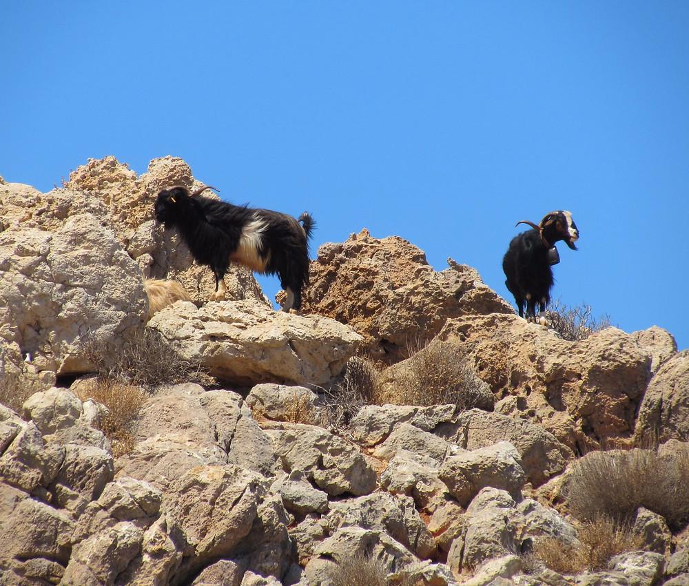 Критские козы