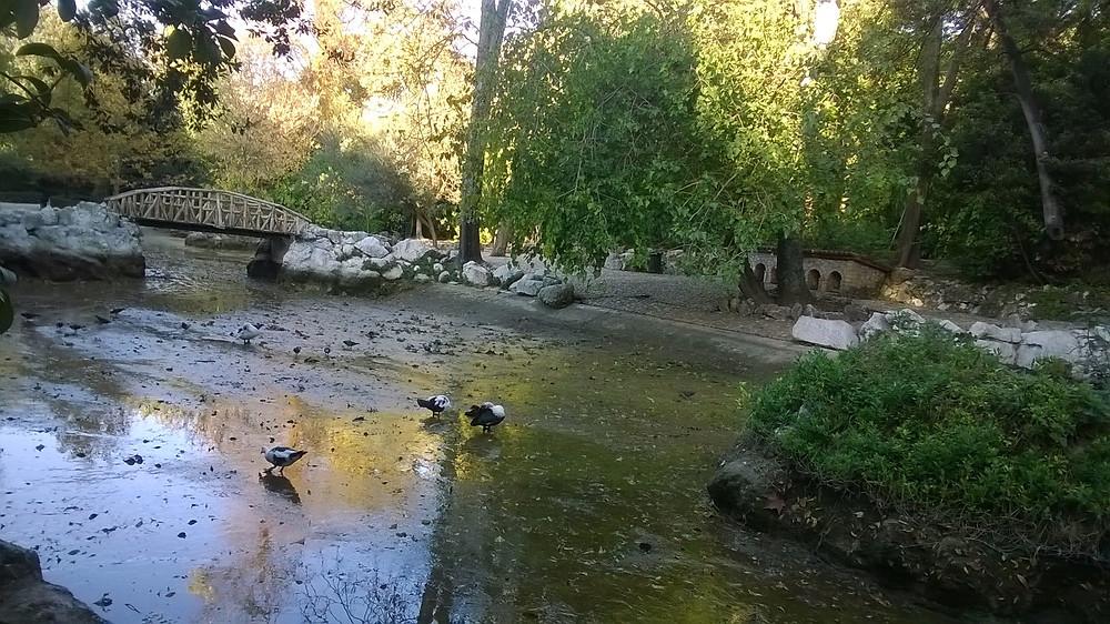 Так пруд в Национальном саду выглядел вчера