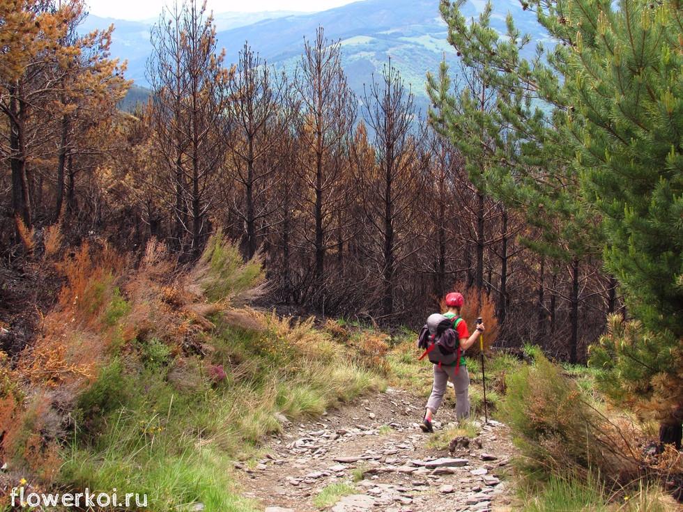 Camino Primitivo, день 4: Peñaseita – Grandas de Salime