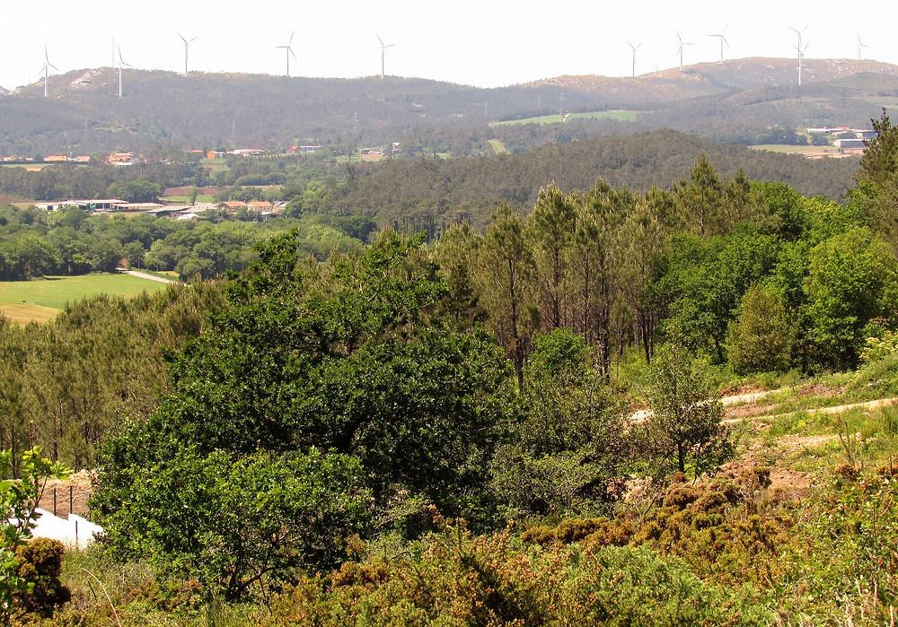 Пейзаж с ветряками
