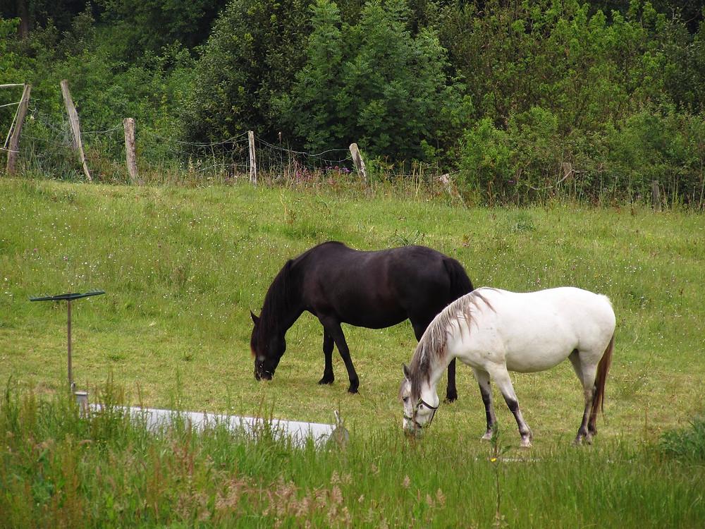 Черный и белый конь