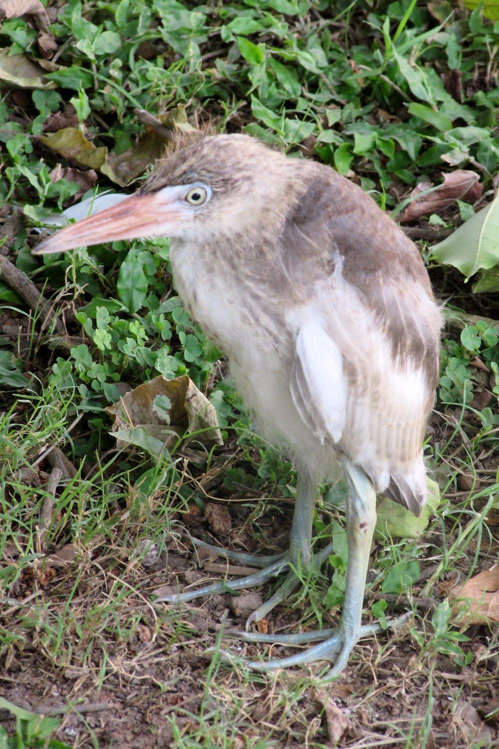 Смешная птица