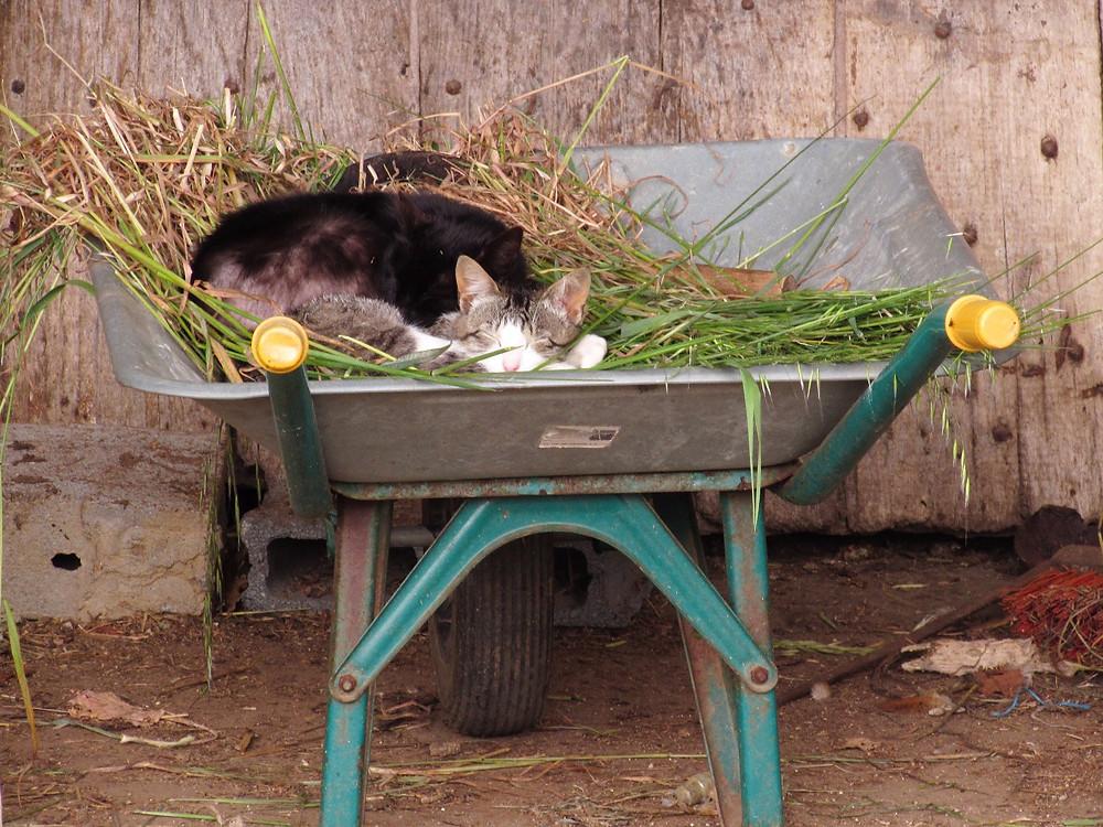 Кошка спит в тачке