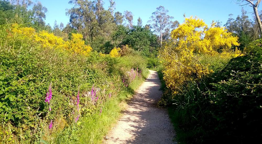 Дорога среди цветов