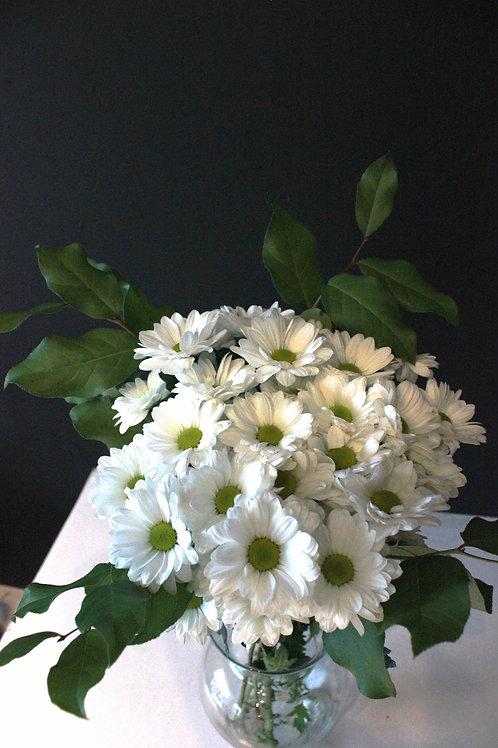 Bouquet de marguerites blanches
