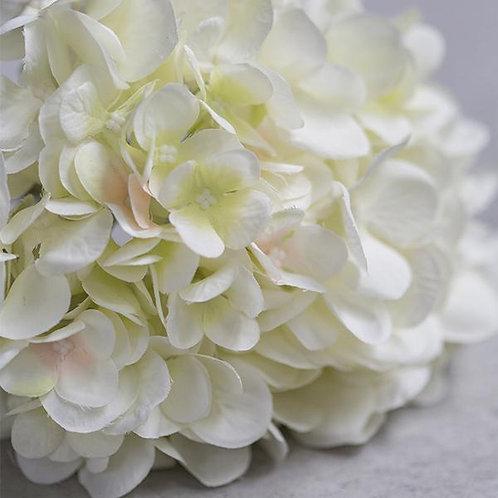 Hydrangée blanc