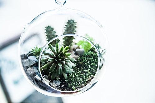 Bulle avec 2 plantes