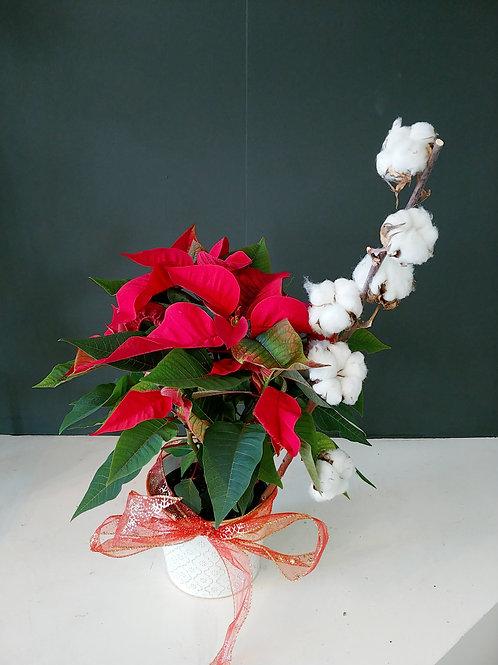 """Poinsettia  6"""" avec tige de coton"""