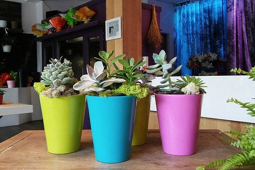 Jardin de plantes dans un pot en céramique coloré