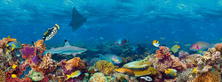 Solevitarium-Themenwelt Under the sea