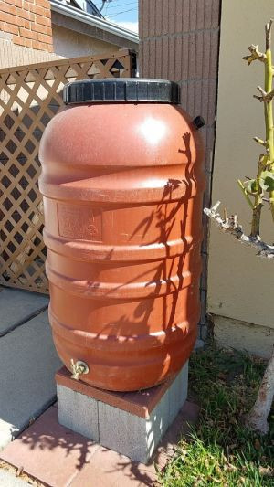 Upcycled olive barrel used for rain water collection.