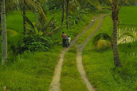 Entdeckung von Ubud und seiner Umgebung