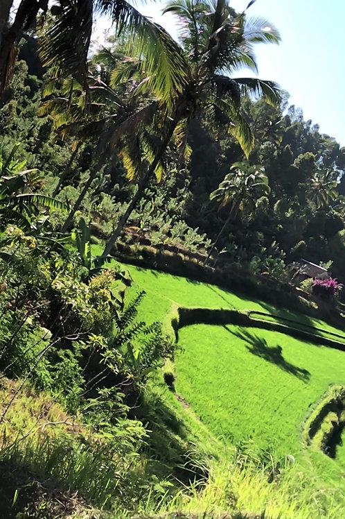 Découverte d'Ubud et de ses environs