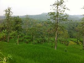 Taman Ayun – Batukaru – Jatiluwih – Ulun Danu Temple