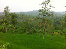 Taman Ayun - Batukaru - Jatiluwih - Tempio di Ulun Danu