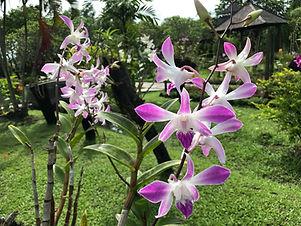 Pupuan – Banjar – Tamblingan Trekking