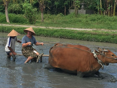 Bali Dorfleben