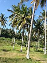 Pupuan - Munduk - Trekking Tamblingan