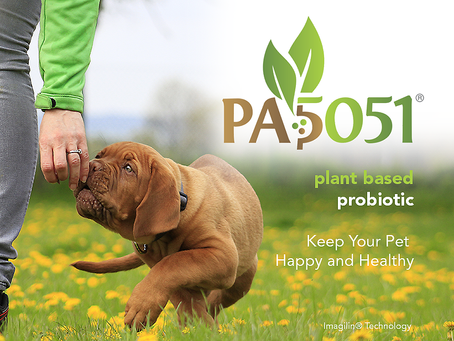 A New Plant-Based Probiotic to Keep Your Pet Happy and Healthy