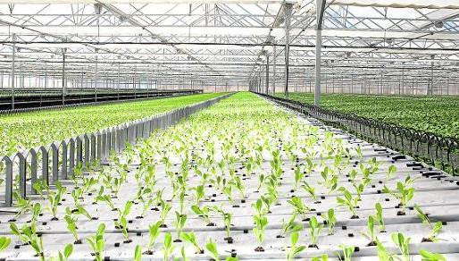 LA AGRICULTURA ESPAÑOLA: Una de las más limpias de Europa.
