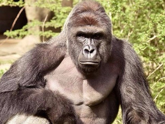 Alabama Hockey Announces Harambe Night