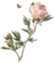 kisspng-botanical-illustration-drawing-w