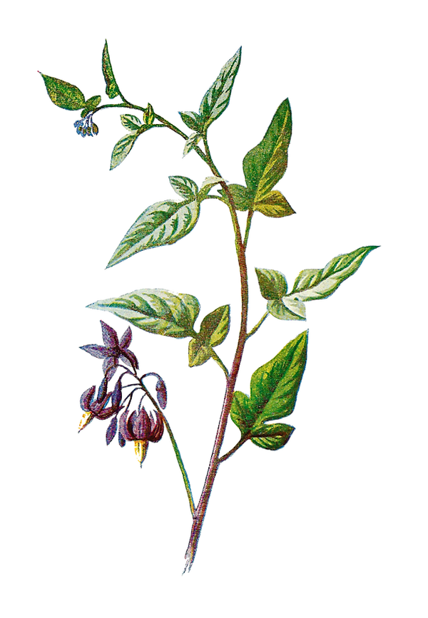 kissclipart-free-botanical-png-clipart-b