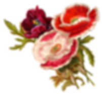 flower-poppy-clipart-old-illustration-bo