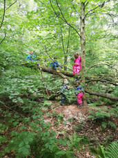 WILD Forest School Session!