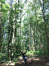 Child Plays on Slack Line, at WILD Forest Schoool Session, Linn Park, Glasgow.  High trees, Green Leaves, Sun Shines.