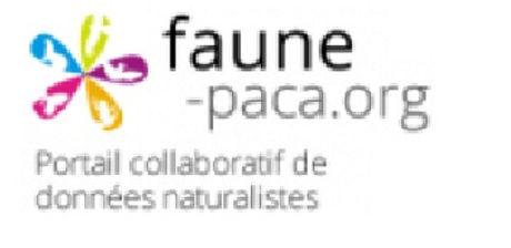 faune_paca.jpg