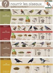 Nourrir les oiseaux