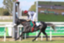 Metrag_winning_Zayed_Cup_-______Copy.png
