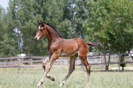 Galileo, élevage, cheval, cevaux, pur sang, course, hippodrome