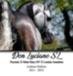 Don Luciano SL, Psyrasic, Lumiar amadeus, étalon, stallion, PSA, pur sang arabe, arabian, show