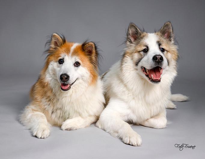 hundefoto