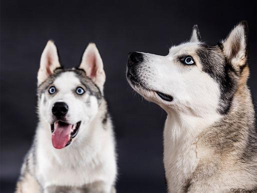 Tilbud på hundefoto