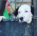 "Instagram_da_Mustafa_Genç_""Kilitli_fbcdn"
