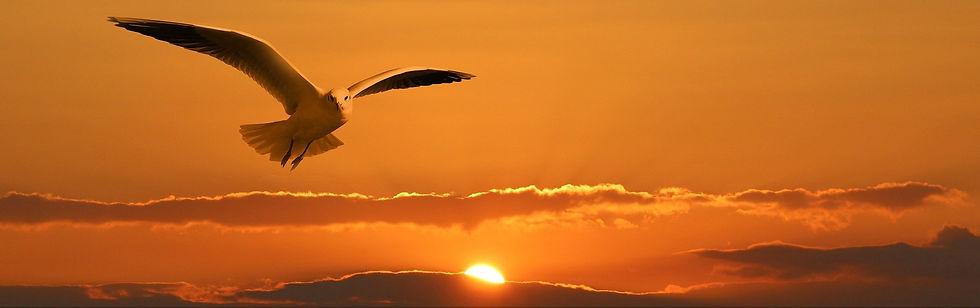 gull-1090835_1920.jpg