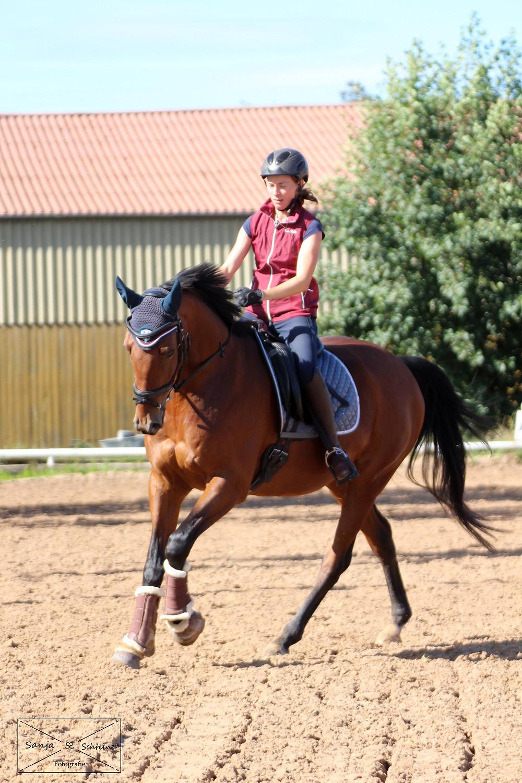 Im Galopp mit nachgiebiger Hand, Pferd ist gut am Sitz und motiviert bei der Sache.