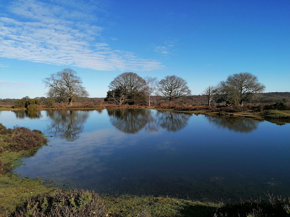 New Forest Pond