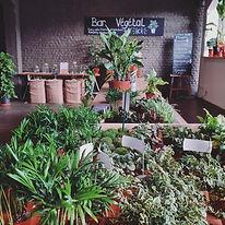 Notre bar végétal proposetous les ingrédients et outils pour vous permettre de réaliser votrepropreterrarium, kokedama ou pour rempoter vos plantes sur place.Venez vous salir les mains dans une ambiance végétale, sans rendez-vous et pendant les heures d'ouverture.