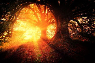 magical-trees sunlight.jpg