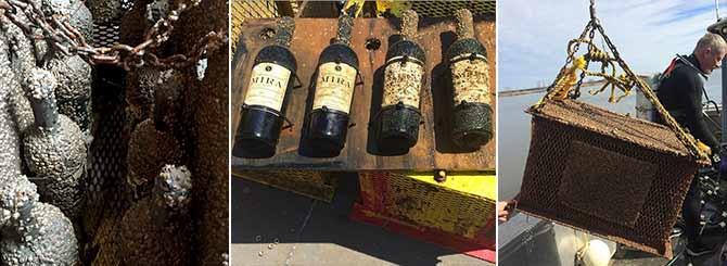 Mira Şaraphanesi sualtı şarap yıllandırma  projesi