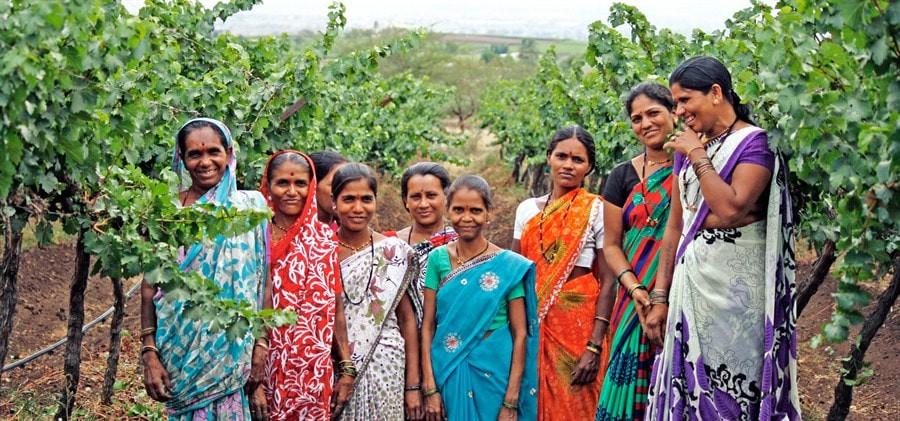 Hindistan'da Bağcılık