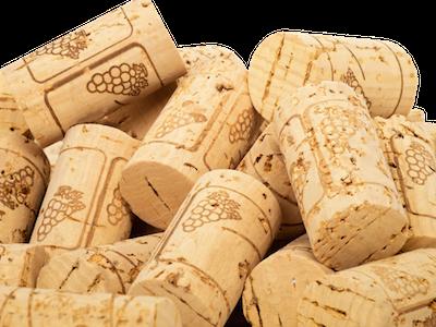 Şarap mantarının  ikinci baharı