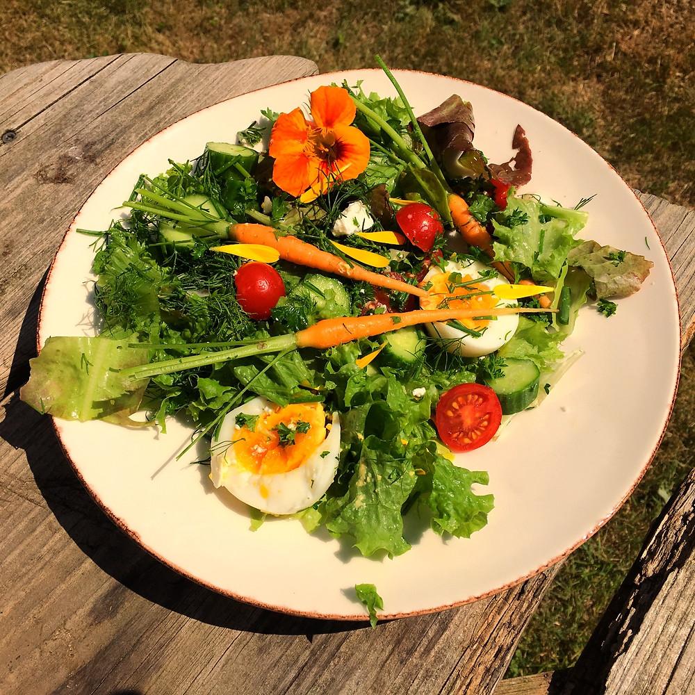 Salat frisk fra haven
