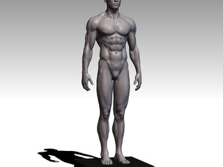 Human Body (Man) 1/8 scale