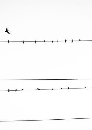 Oiseaux sur Power Line